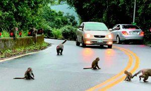 誰打破人猴界線