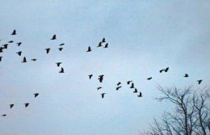 鳥群的相變