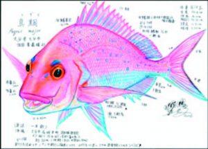 發現滅絕魚種