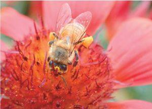 小學生拍昆蟲生態 驚艷眾人