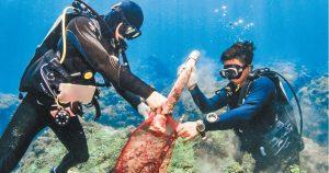 海底垃圾密度逾全球 危害海洋生物